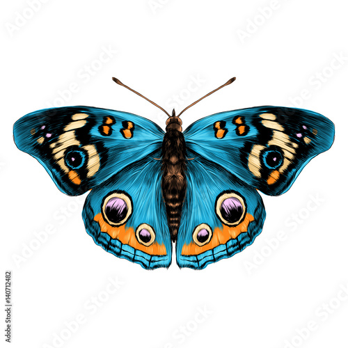 Fotografía  butterfly with open wings top view of symmetry, sketch the graph of vector color