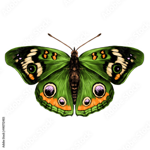 Fototapeta butterfly with open wings top view of symmetry, sketch the graph of vector color drawing butterfly with green wings