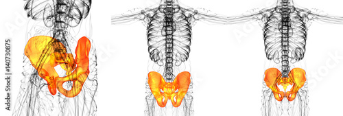 Photo 3D rendering medical illustration of the pelvis bone