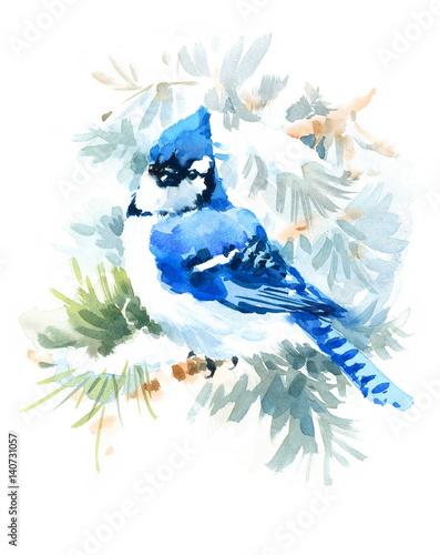 Watercolor Bird Blue Jay Winter Christmas Hand Painted Greeting Card Illustratio Wallpaper Mural