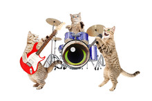 Band Musicians Cats, Isolated ...