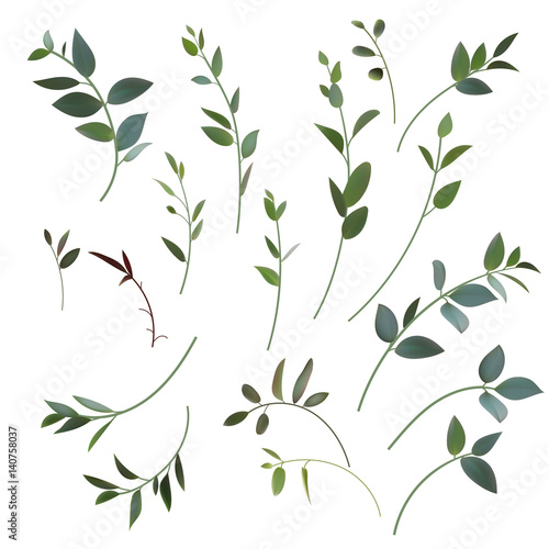 Fototapeta 728693 Set of vector mesh small branches for floral design obraz na płótnie