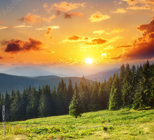 Wall mural - Location place Carpathian national park, Ukraine, Europe.