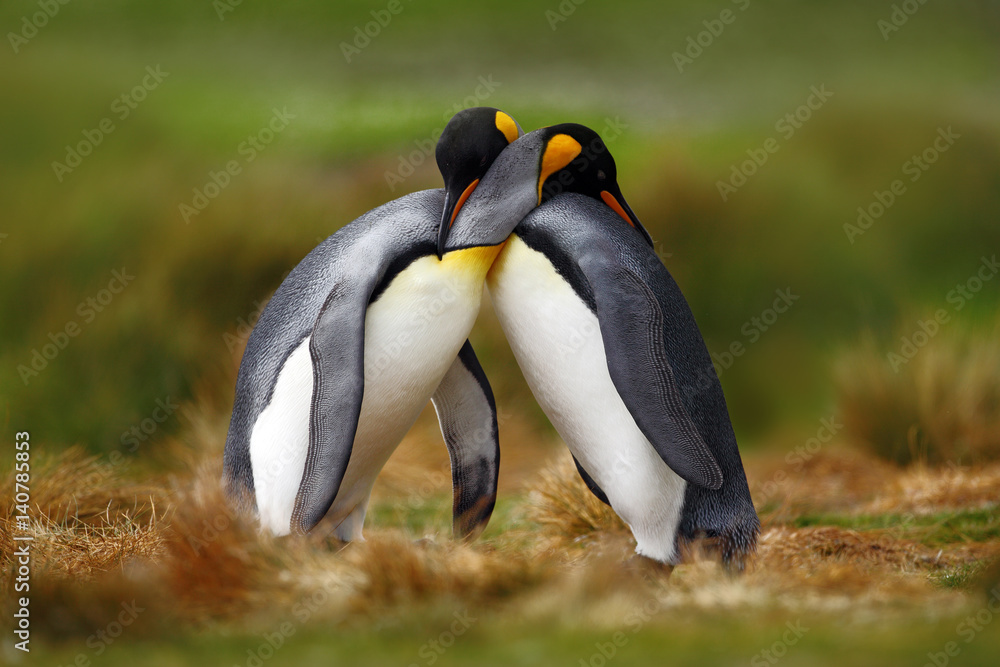 Image of: Quotes 100 Cm Foto4artbe In De Dag Animal Love King Penguin Couple Cuddling Wild Nature