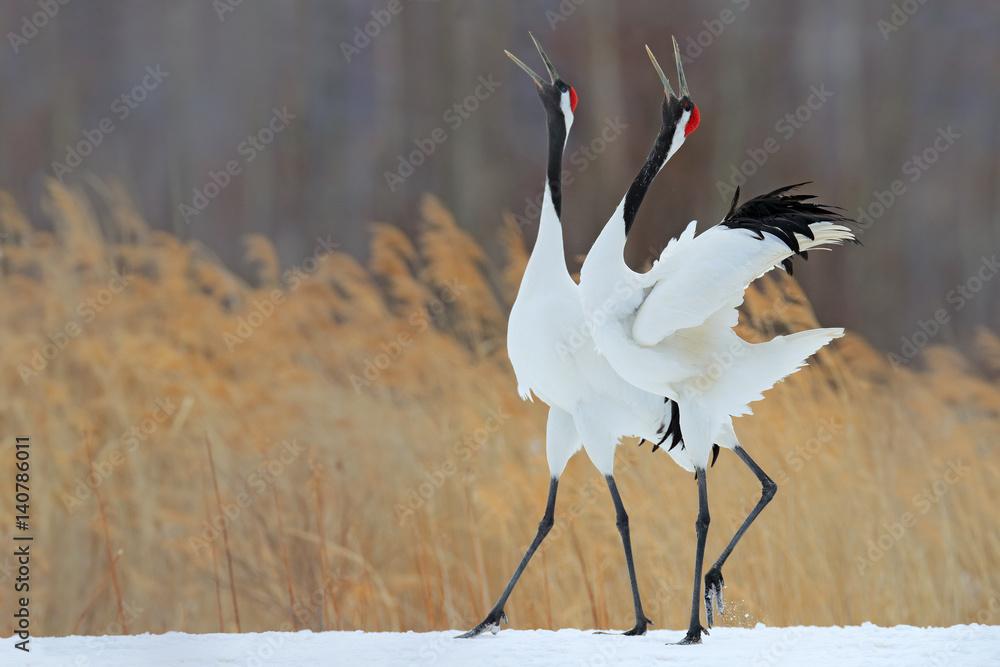 Photo  Bird behaviour in the nature grass habitat