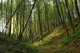 Wrzelowiecki Park Krajobrazowy.