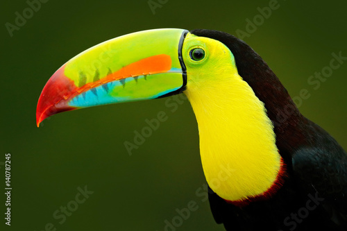 Foto op Canvas Toekan Detail portrait of toucan. Bill toucan portrait. Beautiful bird with big beak. Toucan. Big beak bird Chesnut-mandibled sitting on the branch in tropical rain with green jungle background, Costa Rica.