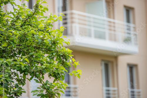 Foto op Aluminium Op straat tree branch with building on background