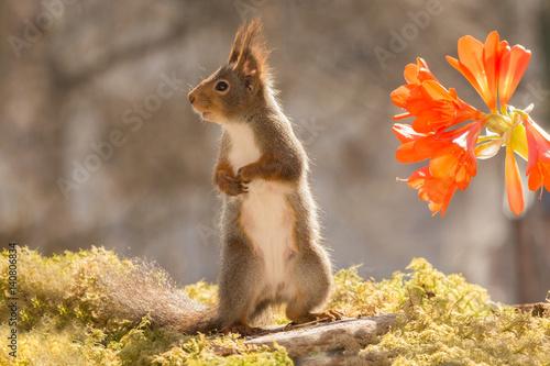 Foto op Canvas Eekhoorn from flower light