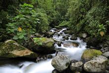 Stream In The Cloud Forest. Cerro Punta, Boquete, Panama