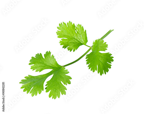 Green coriander leaves close-up, isolation on a white background