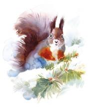 Watercolor Squirrel - Hand Dra...