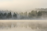 Foggy forest and lake at dawn  - 140876898