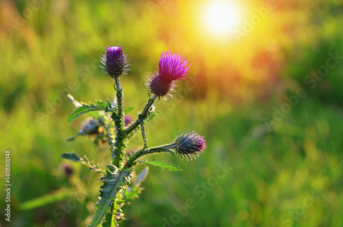 Photo  Agrimony flower or burdock in a meadow