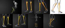 3d Rendering Medical Illustration Of The Tibia Bone