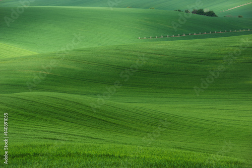 Foto op Plexiglas Groene Rolling hills with fields of wheat and trees. Amazing fairy minimalistic spring landscape with green grass fields in the morning in South Moravia, Czech Republic.