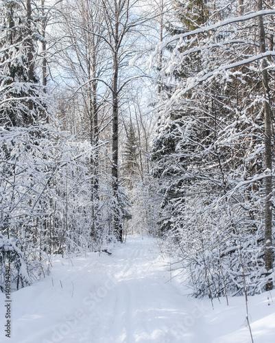 Poster Fleur Ski track in winter forest.