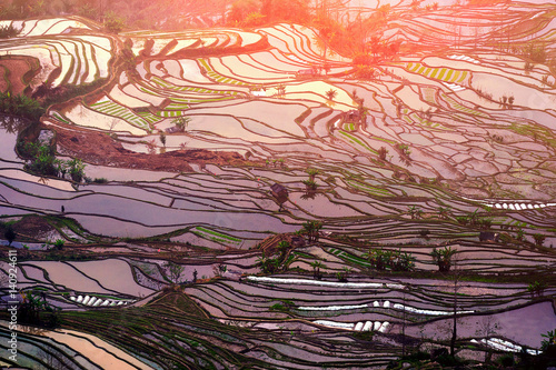 Autocollant pour porte Les champs de riz Terraced rice fields in Yuanyang, China.