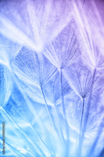 nasiona-dmuchawca