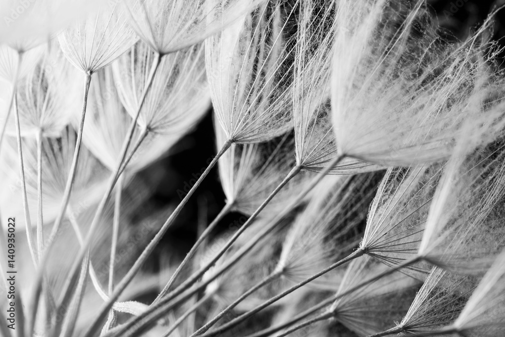 Fototapety, obrazy: Abstract macro photo of plant seeds. Black and white