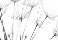 Abstract Macro Photo Of Plant ...