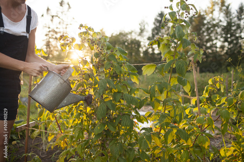 Papiers peints Jardin A Woman Waters Her Garden With A Watering Can In Fort Langley