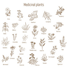 Hand Drawn Medical Herbs And Plants