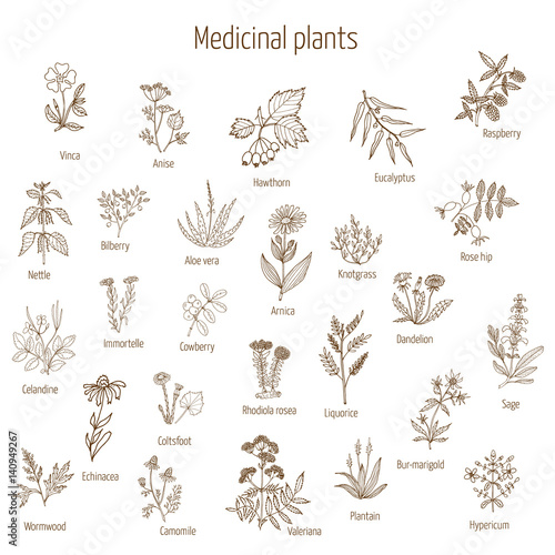Fotografia hand drawn medical herbs and plants