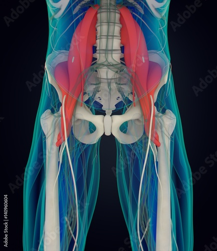 Human anatomy, psoas muscle, soul muscle, core strength, yoga, pilates Fototapet
