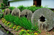 Lancaster, Pennsylvania - June 5, 2015:  Row Of Round Millstones Decorates A Garden With Iris, Pansies, And Daylilies At The Historic 1719 Hans Herr House