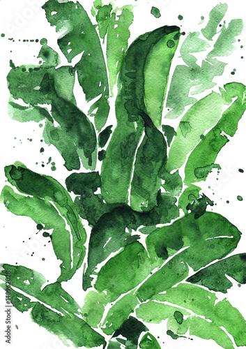 zielone-liscie-bananowca