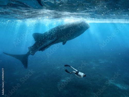 Plakat Freediving z rekinami wielorybimi