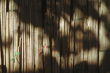 bamboo background with light