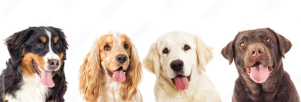 Fototapety, obrazy: portrait dogs