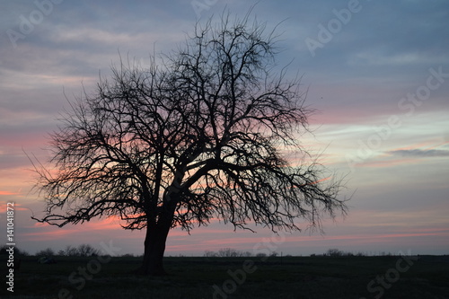 Staande foto Afrika Rural Sunset