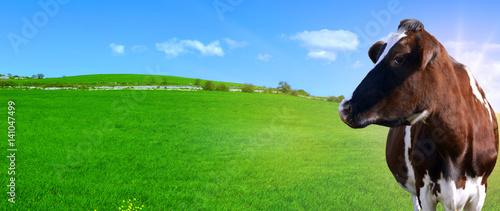 Fotografie, Obraz  Mucca da latte senza corna su uno sfondo con una collina verde e un cielo azzurr