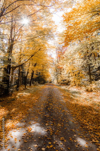 Fotobehang Weg in bos Forest with pathway running through it, autumn leaves on path