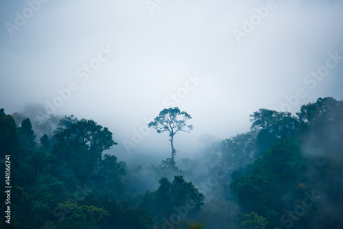 Photo  Tree growing in jungle on foggy day