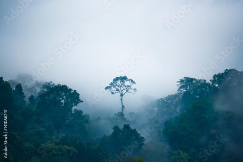 drzewa-rosnace-w-dzungli-w-mglisty-dzien