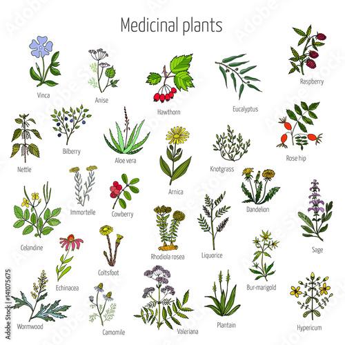 Fototapeta Vintage collection of medical herbs obraz na płótnie