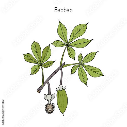 Photo Baobab Adansonia digitata