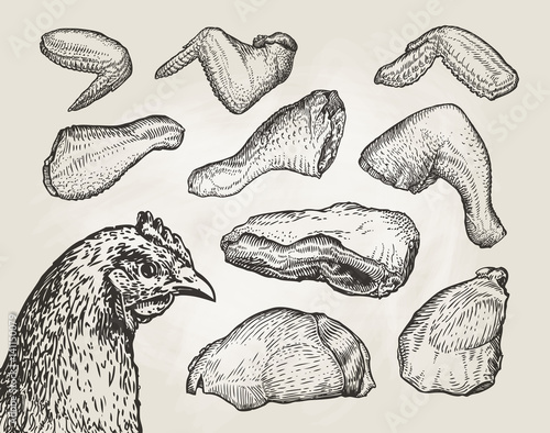 Obraz na płótnie Hand drawn cuts, chicken meat