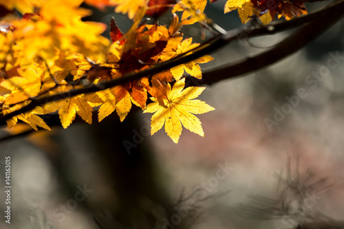 Photo  autumn  fall background