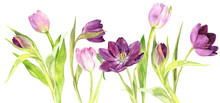 Watercolor Purple And Pink Tul...