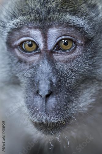 Photo sur Toile Croquis dessinés à la main des animaux Portrait of a monkey in Thailand