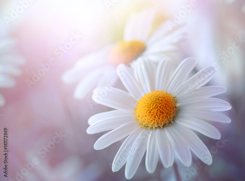 Photo sur Aluminium Marguerites Sensual daisy field.