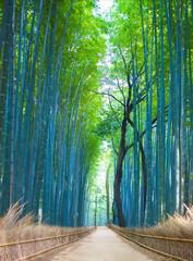 Panel Szklany Optyczne powiększenie Bamboo Groves, bamboo forest in Arashiyama, Kyoto Japan.