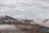 Czerwoni i zieleni drzewa między morzem mgła w typowej jesieni scenerii - 141176602