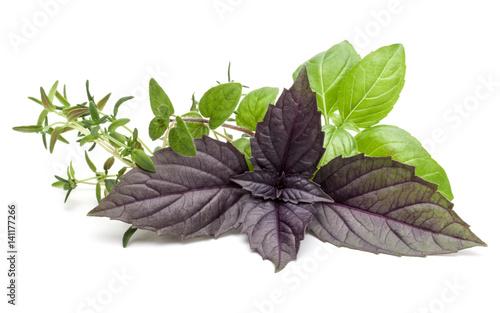swieza-zielarska-lisc-rozmaitosc-odizolowywajaca-na-bialym-tle-purpurowa-ciemna-bazylia-z-opalu-slodka-bazylia-oregano-tymianek