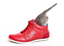 The Kitten Hid In A Red Sports Shoe